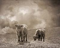 Scottish Highland Cattle No. 2 Fine Art Print