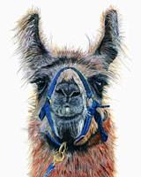 Dalai Llama Fine Art Print