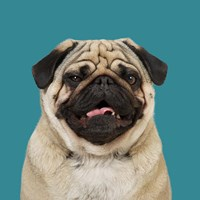 Egon the Pug Fine Art Print