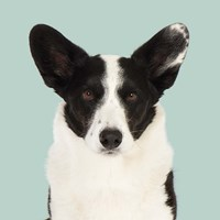 Ludvig the Welsh Corgi Fine Art Print