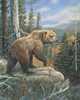 Grizzlies Domain 2 Fine Art Print