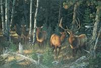 Wilderness Whispers Fine Art Print