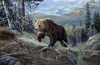 Over The Top Grizzly Fine Art Print