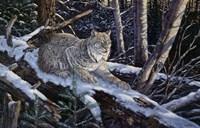 Snow Moon Lynx Fine Art Print