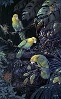 Yellow Headed Amazons Fine Art Print