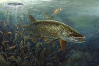 Ice Pike Fine Art Print