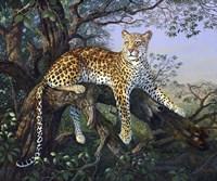 Leopard's Domain Fine Art Print