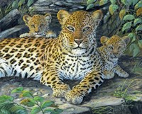 Leopards' Lair Fine Art Print