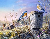 Old Homestead Bluebirds Fine Art Print
