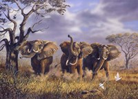 On African Winds Fine Art Print