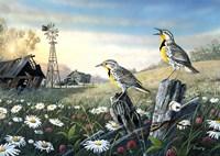 Meadow Outpost Fine Art Print