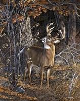 Deer Nibble Fine Art Print