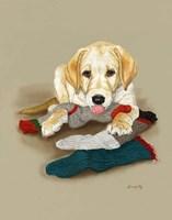 Sock Bandit Fine Art Print