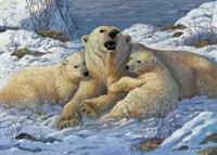 Snow Bears Fine Art Print
