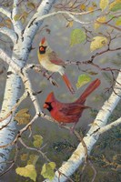 Cardinals In Birch Fine Art Print