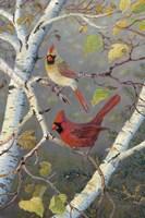 Cardinals In Birch Fine Art Print