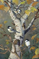 Chickadees In Birch Fine Art Print