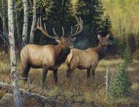 Singing Wilderness Fine Art Print