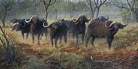Cape Buffalo Fine Art Print