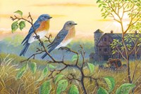 True Blue Bluebird Fine Art Print