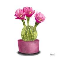 Cactus Flowers V Fine Art Print