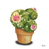 Cactus Flowers VII Fine Art Print