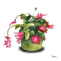 Cactus Flowers VIII Fine Art Print