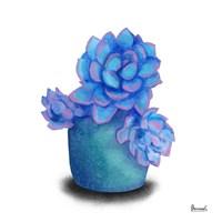 Turquoise Succulents I Fine Art Print