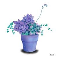 Turquoise Succulents II Fine Art Print