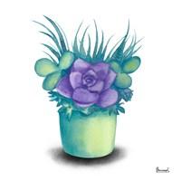 Turquoise Succulents III Fine Art Print