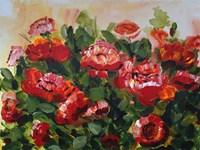 Red Poppies Garden Fine Art Print