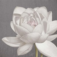 Vintage Lotus on Grey II Fine Art Print
