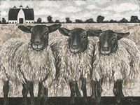 Three Sheep Fine Art Print