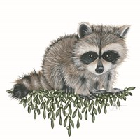 Baby Raccoon Fine Art Print