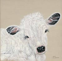 White Calf Fine Art Print