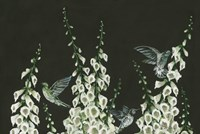Hummingbirds Fine Art Print