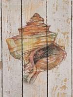Seashell IV Fine Art Print