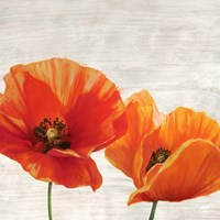Bright Poppies I Fine Art Print