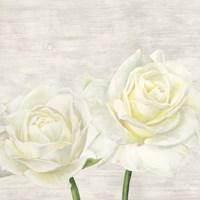 Classic Roses I Fine Art Print
