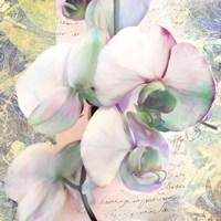 Kaleidoscope Orchid (detail) Fine Art Print