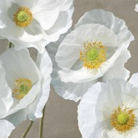 Poppies on Taupe I Fine Art Print
