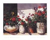 Pots of Geraniums Fine Art Print