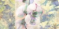 Kaleidoscope Orchid Fine Art Print