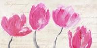 Classic Tulips Fine Art Print