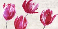 Crimson Tulips Fine Art Print