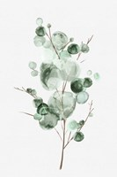 Tender Sprout I Fine Art Print
