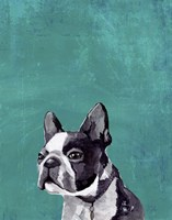 Frenchie Puppy Fine Art Print