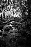 Lush Creek in Forest BW Fine Art Print