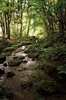 Lush Creek in Forest Fine Art Print