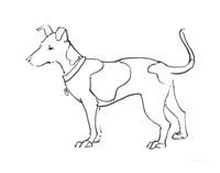 Ink Dog IV Fine Art Print